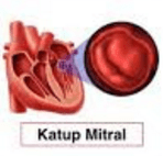 Bagian-bagian Jantung dan Fungsinya dalam Memompa Darah Manusia