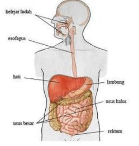 Gangguan Sistem Pencernaan pada Manusia dan Upaya Pencegahannya