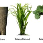 Jenis-jenis Batang Tumbuhan, Contoh, dan Gambarnya