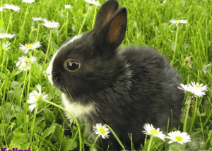 Fakta Unik dan Menarik Seputar Kelinci yang Wajib Anda Baca