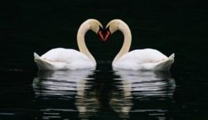 Inilah 10 Hewan Monogami yang Paling Setia Dengan Pasangannya Sampai Mati