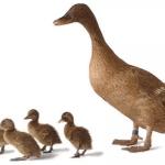 Macam-macam Perkembangbiakan Generatif pada Hewan, Contoh dan Gambarnya
