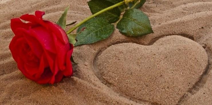 Fakta Unik Dan Menarik Bunga Mawar Sebagai Simbol Kebahagiaan Dan