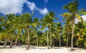 Fakta Unik dan Menarik tentang Pohon Kelapa yang Wajib Anda Baca