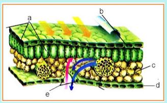 Latihan Soal Un Ipa Smp Materi Struktur Jaringan Tumbuhan