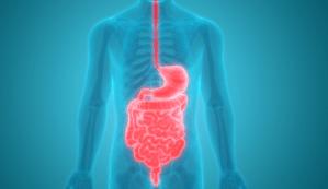 Fakta Unik dan Menarik Mengenai Organ Pencernaan Manusia