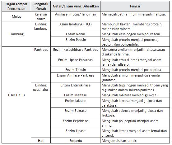 Ringkasan Dan Latihan Soal Un Ipa Smp Mts Materi Sistem Pencernaan