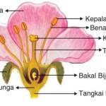 Contoh Latihan Soal IPA Sistem Reproduksi Tumbuhan dan Hewan