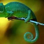 Pengertian Adaptasi Tingkah Laku Pada Makhluk Hidup dan Contohnya
