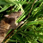 Pengertian Simbiosis Parasitisme dan Contohnya Dilengkapi Gambar