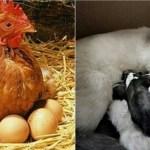 Latihan Soal Sistem Reproduksi Hewan dan Kunci Jawabannya