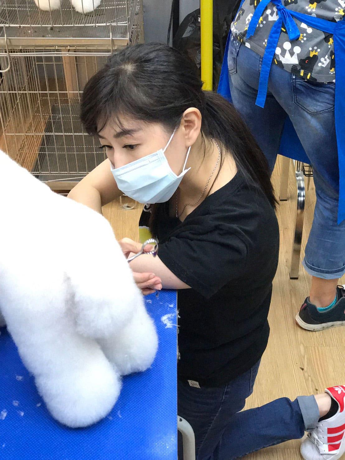臺北寵物美容課程教學-寵物美容證照|阿默寵美學院