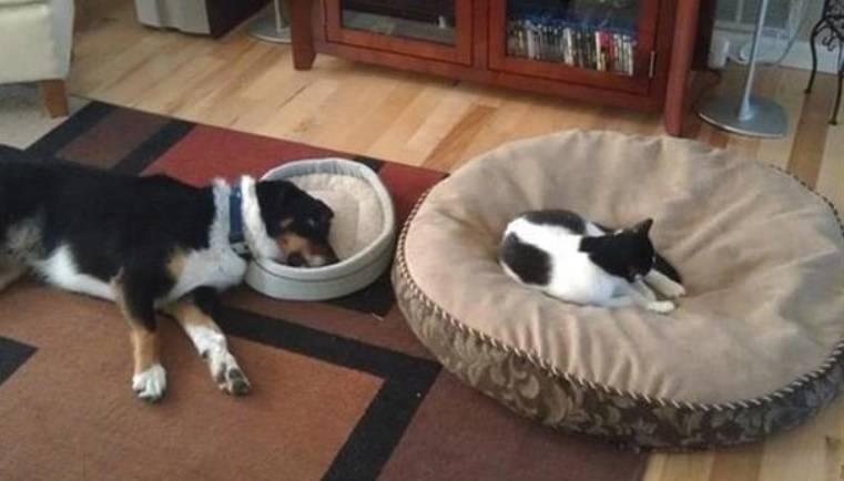 Quando il gatto mette lo zampino sulla cuccia del cane