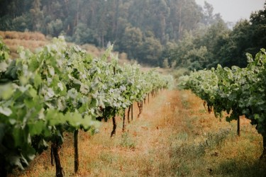 Destination Wedding in Portugal Vineyard - Gabi + Joe_103