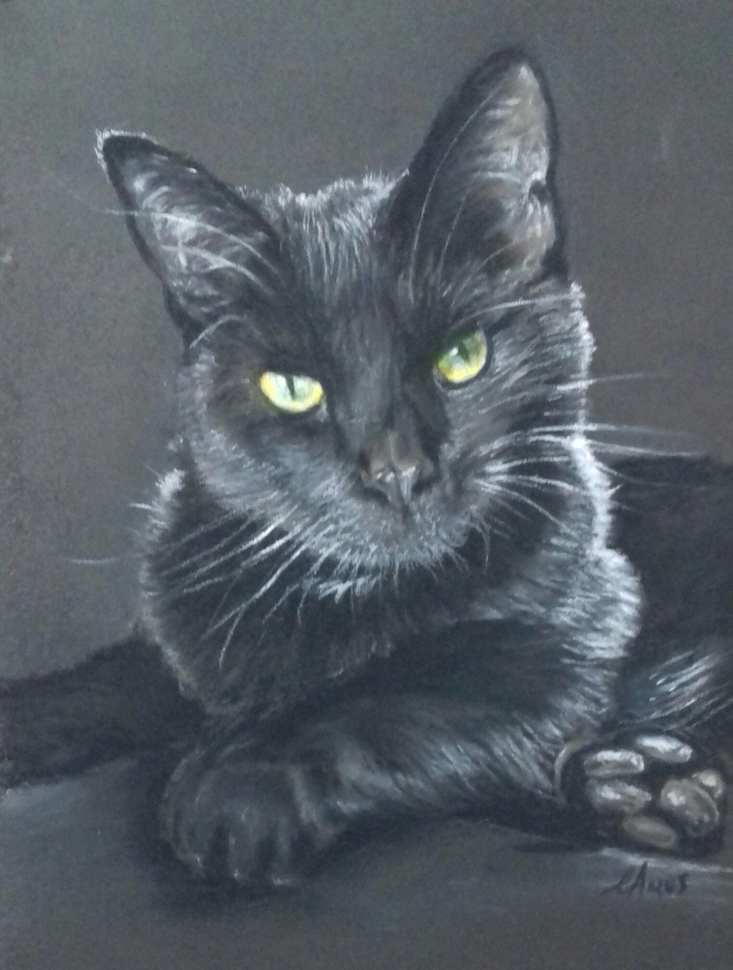 Black cat portrait - White pastel pencil