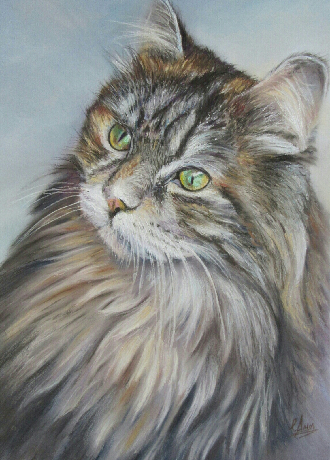 Maine Coon in soft pastels