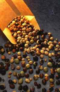 varieties of raw soybeans.