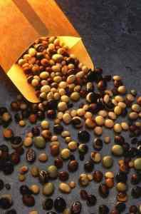 varieties of raw soybeans.