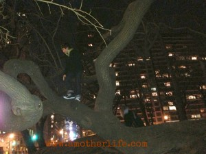 tree climbing in central park