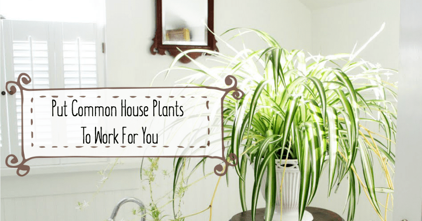 Common House Plants That Purify Your Home