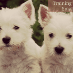 Small Puppies -- Potty Training Tips 1