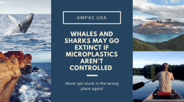 Whales and Sharks May Go Extinct If Microplastics Aren't Controlled