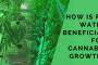 Cannabis Cultivation/Growth