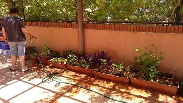 Cuidem les plantes de l'escola