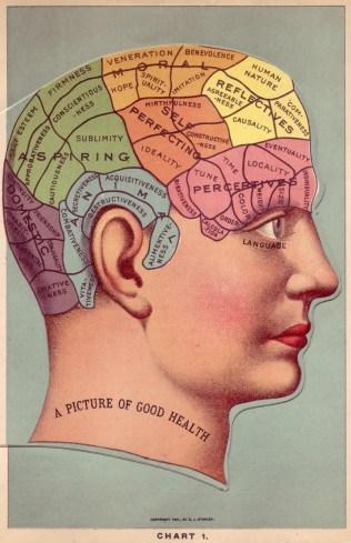 Vintage Medical Illustration, Date Unknown.