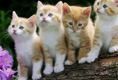 50 Imagens encantadoras De Gatos Fofos Lindos E Engraçados