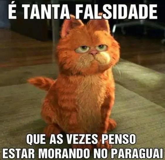 Falsidade para gatos