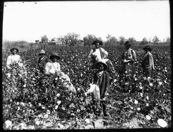 Slaves in the Field