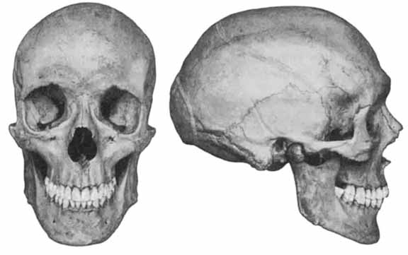 A Nordic skull: Much longer, front to back, than it is wide.