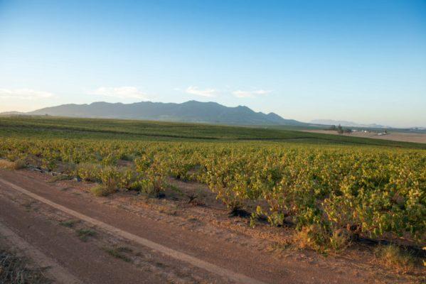 Stellenbosch, South Africa - South African farm land