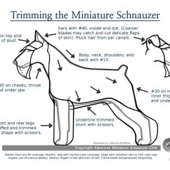 Dog Diagram Outline Large Wiring For Dimmer Switch Single Pole Pet Grooming Tips Click On Any Chart Photo To See A Larger Picture