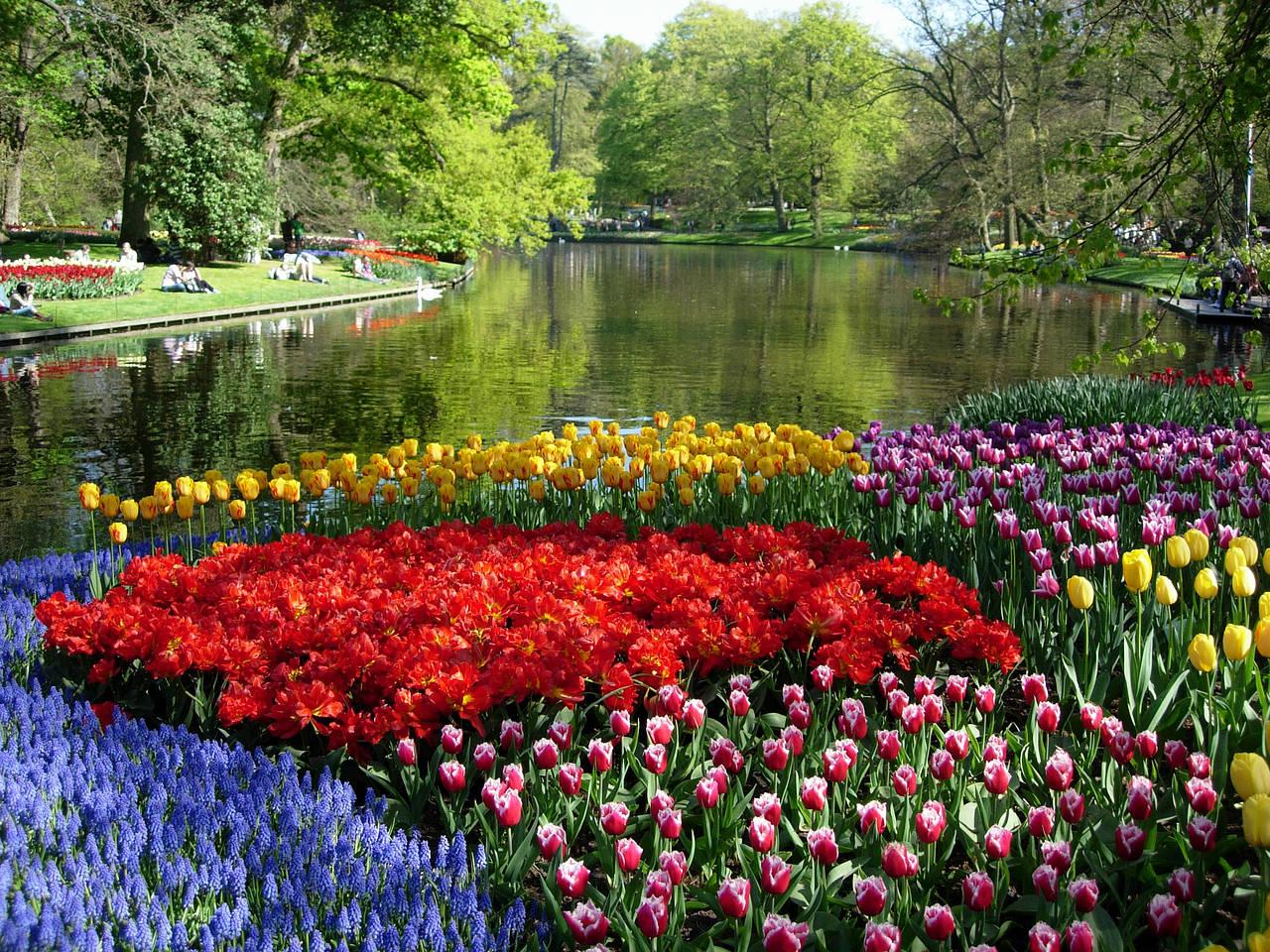 Resultado de imagem para jardim de flores keukenhof