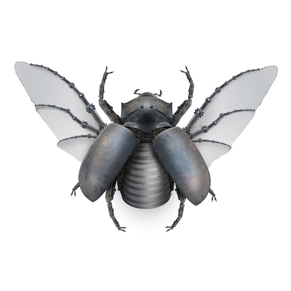 five-horned rhino beetle