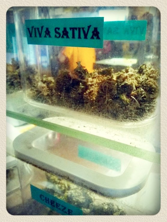 Weed Viva Sativa at coffeeshop Greenhouse Effect  in Amsterdam