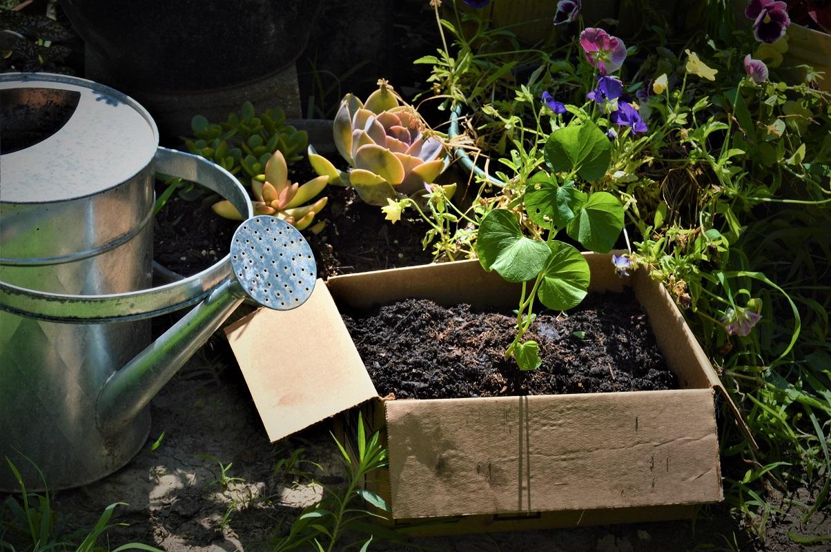 Planting Sweet Potatoes In A Cardboard Box A Rural Girl Writes