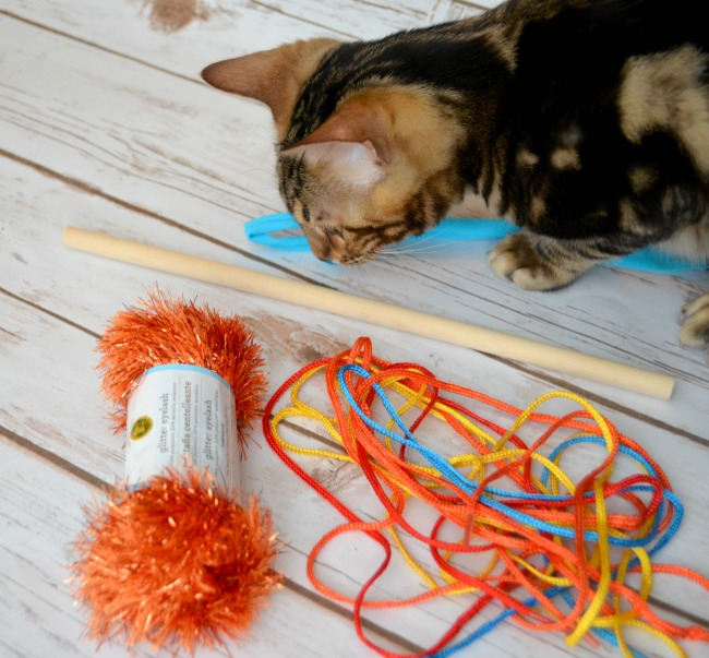 cattoy10