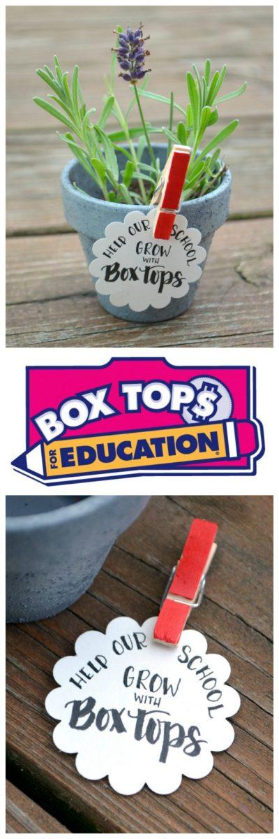 boxtopspin