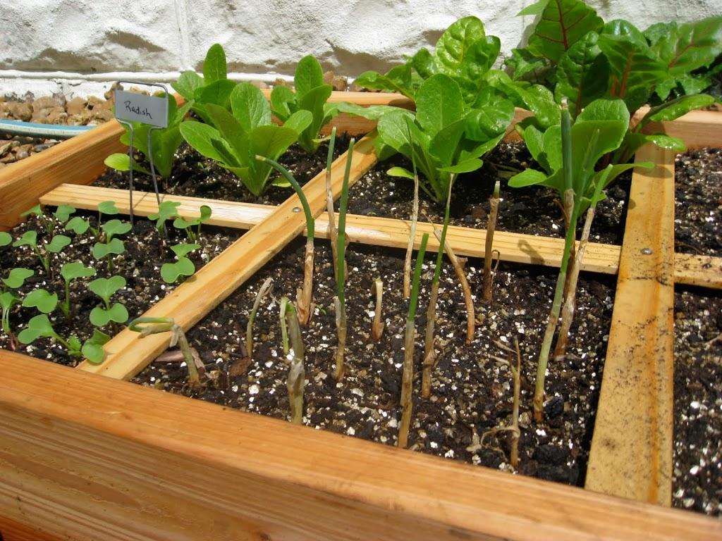 Square Foot GardeningUpdate