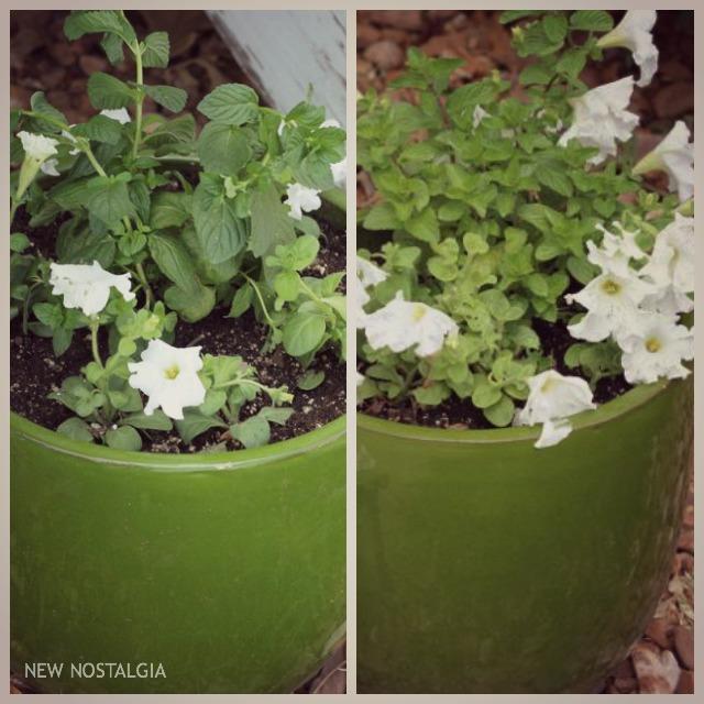 2-Mint-Flower-Pots
