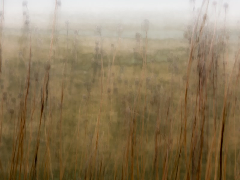 Artistic abstract image of a scene in nature including reeds.