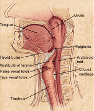 The Normal Swallowing Process  Amy Speech & Language Therapy, Inc
