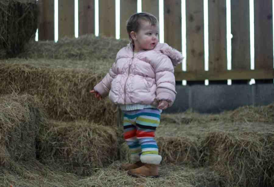 Rose in hay barn