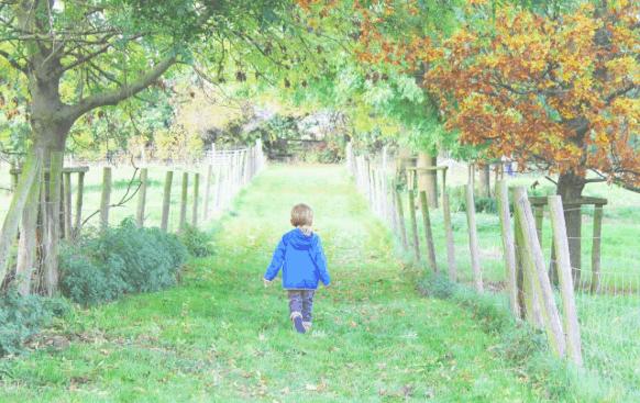 Little boy walking through orchard