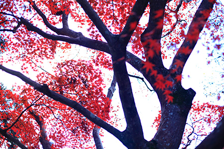 HOSHINOYA Kyoto  Kyoto  IS JAPAN COOLTravel and