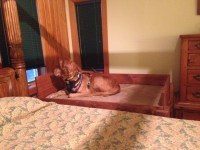 Ana White | Dog bed - DIY Projects
