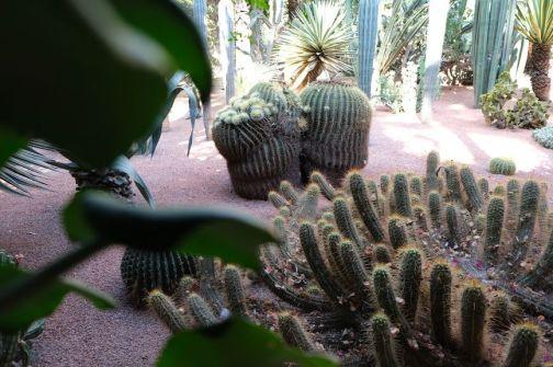 Cactus del Jardin